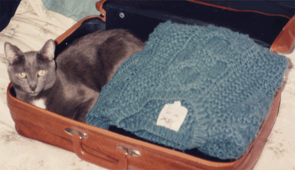 Wiggy in the suitcase